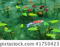 모네의 연못 41750423