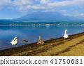 야마나카코, 야마나카 호수, 백조 41750681