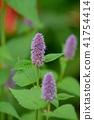 꽃, 플라워, 허브 41754414