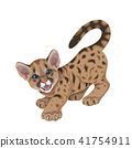 Angry Cougar Cub Isolated 41754911
