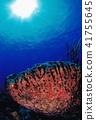 물고기, 생선, 수중 사진 41755645