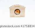 看從木屋的金黃倉鼠 41758834