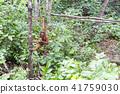 猩猩 野生 野生動物 41759030