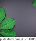 green, leaves, chestnut 41764005