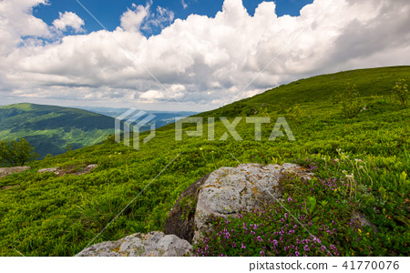 wild herbs among the rocks in summer mountains 41770076