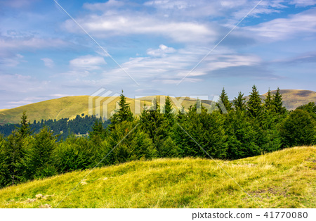 summer landscape with forested hills 41770080
