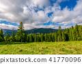 forest, meadow, hillside 41770096