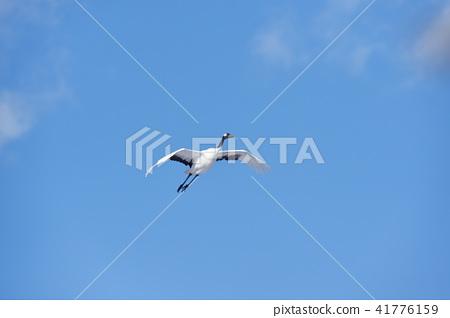 蓝天和起重机(北海道·Tsurui) 41776159