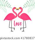 火烈鳥 愛 愛情 41780837
