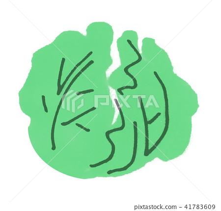 蔬菜 甘藍 包菜 41783609