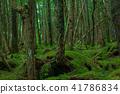 숲, 수풀, 삼림 41786834