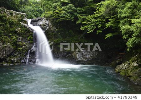 The waterfall of Kiaton (Totsukawa village Yoshino gun, Nara prefecture) 41790349