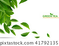 tea, green, leaf 41792135