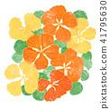 노란색과 오렌지의 나스타찌우무 꽃 41795630