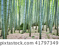 bamboo thicket, bamboo, forest 41797349