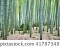 Bamboo Park Beppu Park 41797349