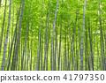 Bamboo Park Beppu Park 41797350
