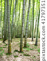 bamboo thicket, bamboo, forest 41797351