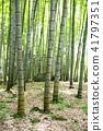 Bamboo Park Beppu Park 41797351
