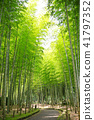 bamboo thicket, bamboo, forest 41797352