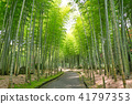 bamboo thicket, bamboo, forest 41797353