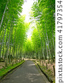 bamboo thicket, bamboo, forest 41797354