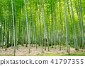 bamboo thicket, bamboo, forest 41797355