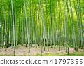 Bamboo Park Beppu Park 41797355