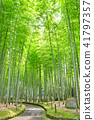 bamboo thicket, bamboo, forest 41797357