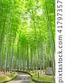 Bamboo Park Beppu Park 41797357