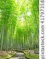 bamboo thicket, bamboo, forest 41797358