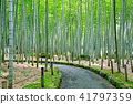 bamboo thicket, bamboo, forest 41797359