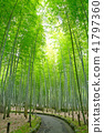 bamboo thicket, bamboo, forest 41797360