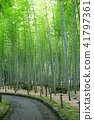 bamboo thicket, bamboo, forest 41797361