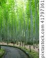 Bamboo Park Beppu Park 41797361