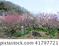 유가 와라 매화 幕山 공원 41797721