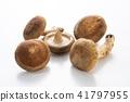 표고 버섯 41797955