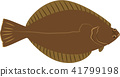 righteye flounder, fish, fishes 41799198