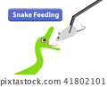 Green Snake feeding with raw rat in vector art 41802101