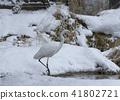 นกยางโทนใหญ่ 41802721