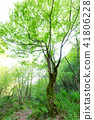 wood, arboreal, forest 41806228