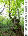 樹木 樹 木頭 41806237