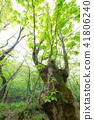 樹木 樹 木頭 41806240