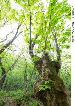 一棵樹 41806240