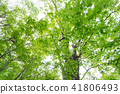 잎, 이파리, 잎사귀 41806493