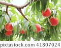 복숭아, 과일, 후르츠 41807024