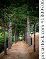 소나무숲 산책로 41809506