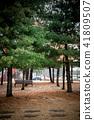 소나무숲, 힐링, 자연 41809507