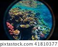 Coral and fish 41810377