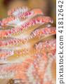 圣诞树蠕虫 特写 多彩 41812642